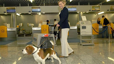 airline-pet-lounge.jpg
